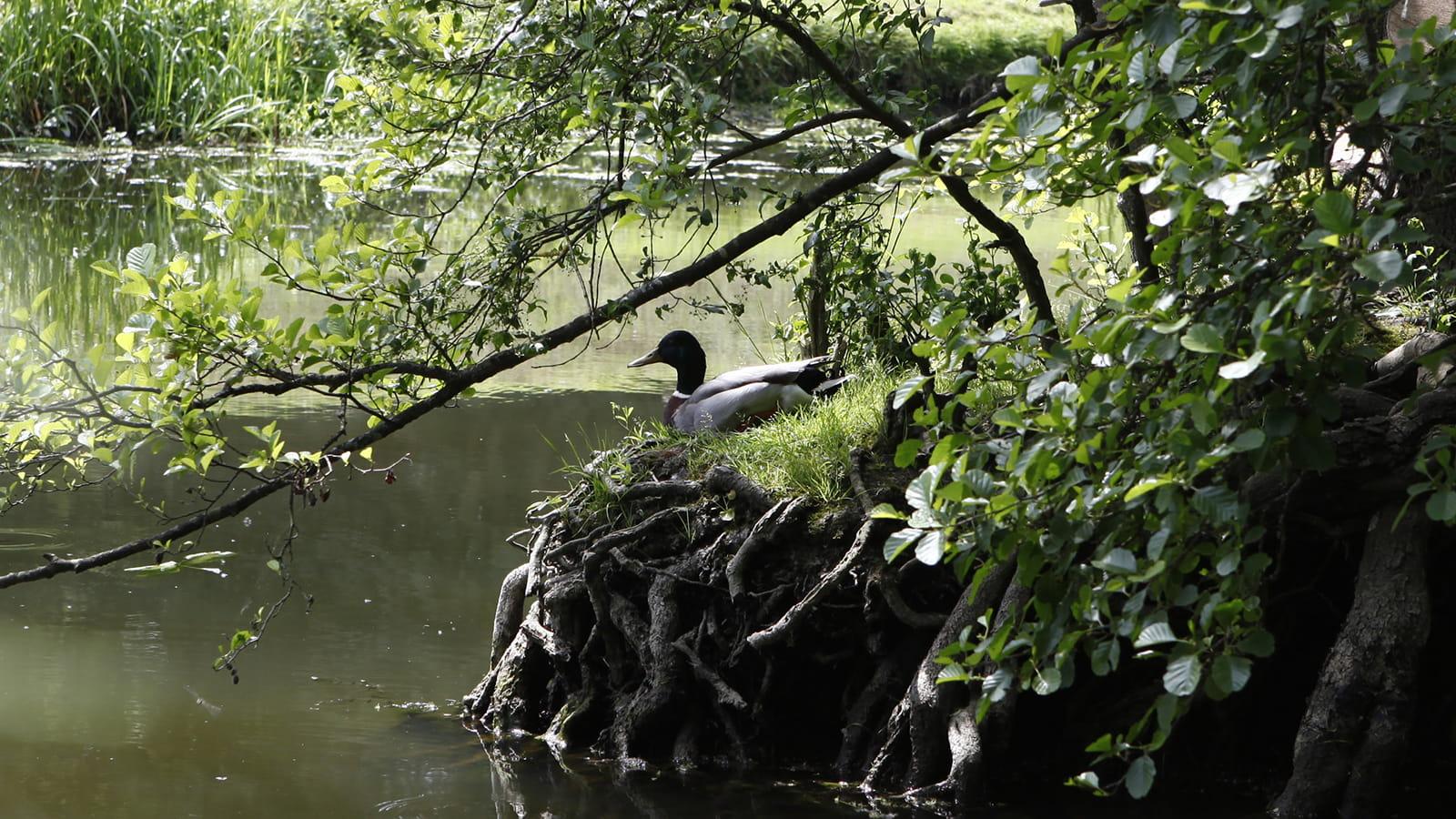 Espace Naturel Sensible à Mirebeau