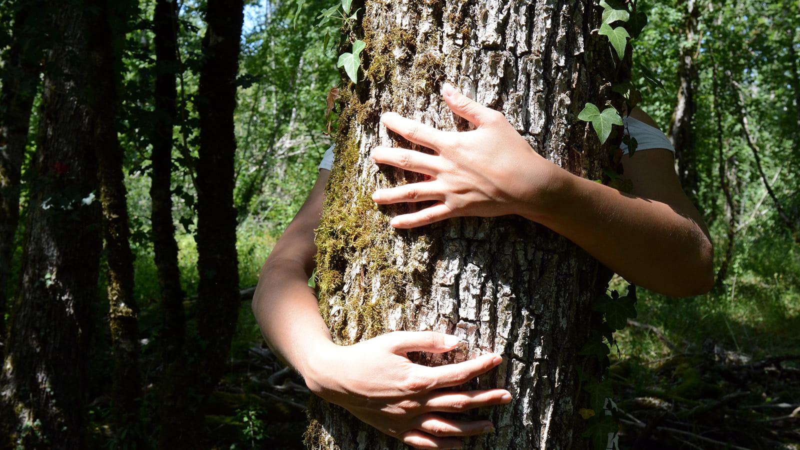 Forêt de Duesme