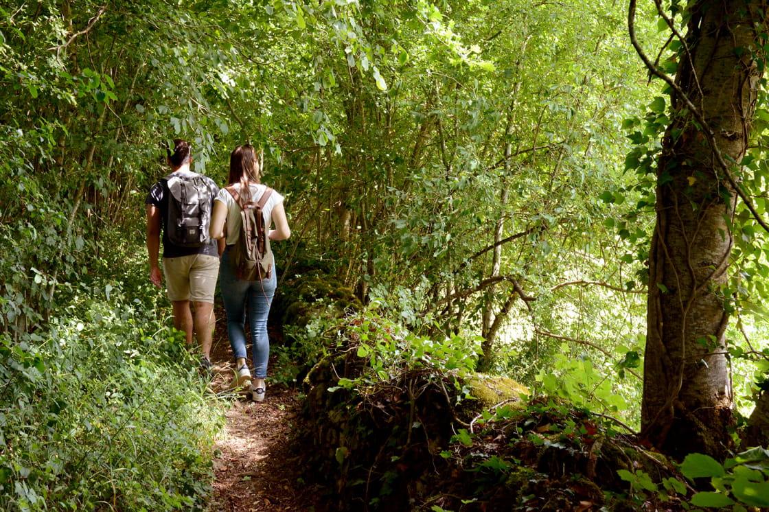 Balade dans le Parc national de forêts