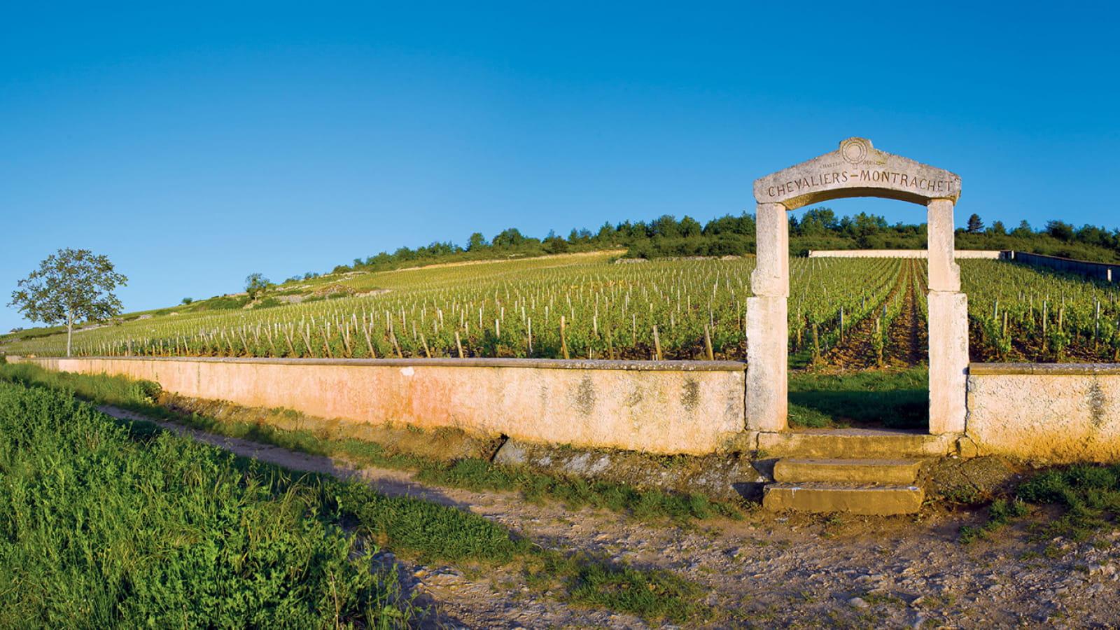 Parcelle de Montrachet