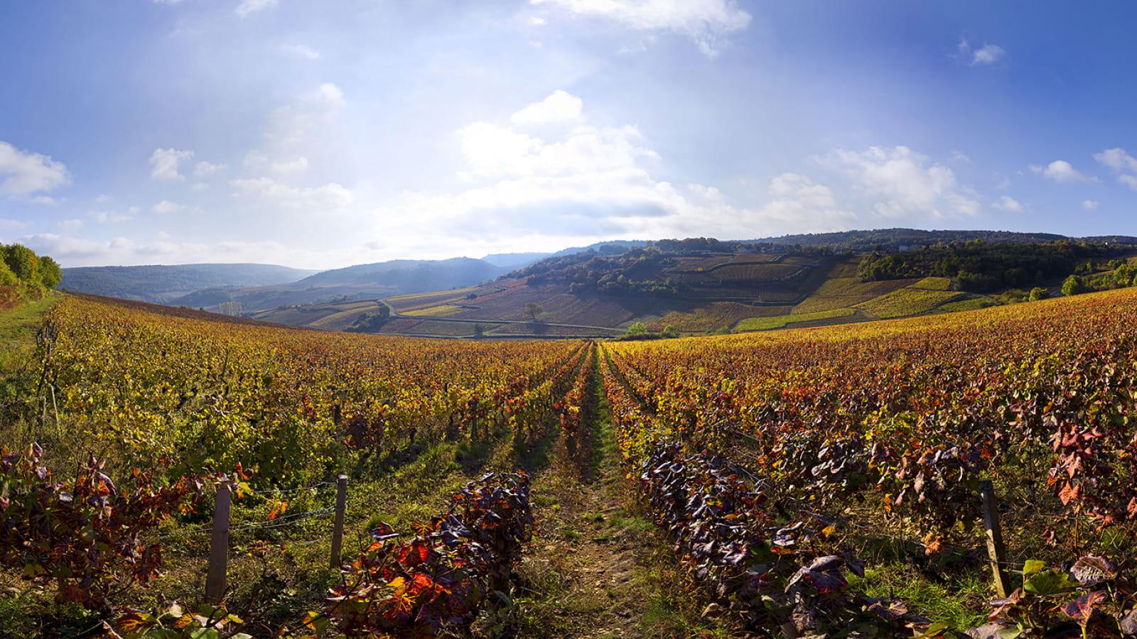 Vue sur les vignes de Saint-Romain