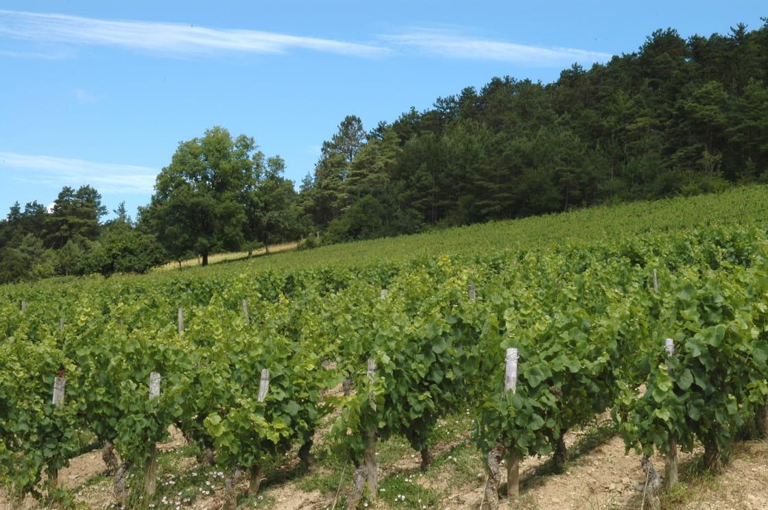 Vignoble de Massingy en côte