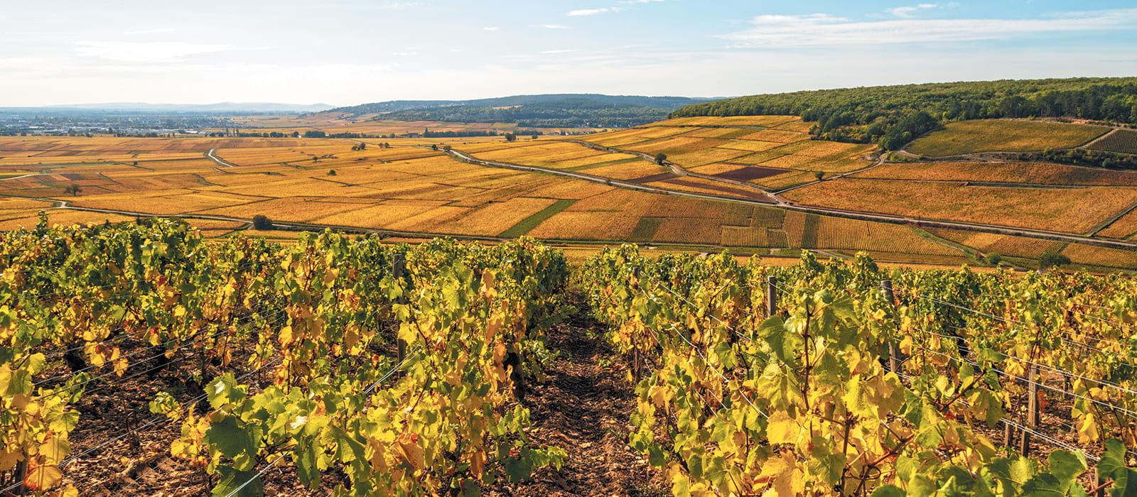 Vignoble Côte de Beaune