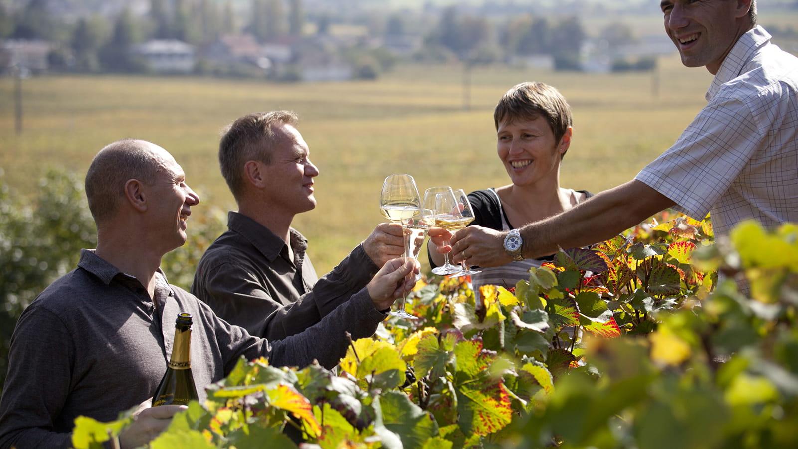 Dégustation entre amis dans les vignes