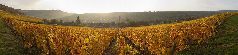 Vignoble Saint Aubin Automne