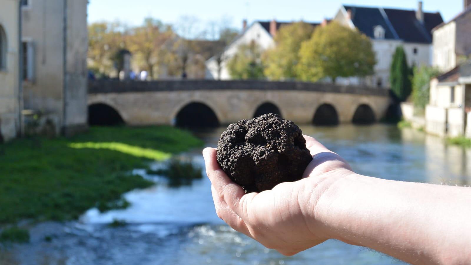 Truffe de Bourgogne